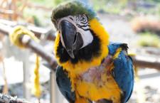 Týrání papoušků ve zverimexech: běžná praxe, proti které nikdo nezasáhne