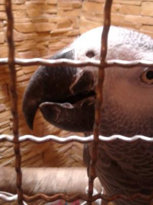 Žako s přerostlou dolní čelistí zobáku v olomouckém zverimexu (Foto: autor)
