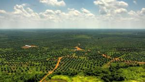 Palmové plantáže