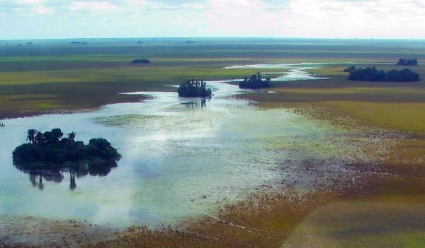 Palmové ostrůvky v rezervaci Barba Azul, jediné hnízdiště arů kanind na světě (Foto: Bennett Hennessey, Asociación Armonia)