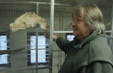 Karel Šimon: Mutace u papoušků mě baví, modré kakariky jsem odchoval jako první v Česku