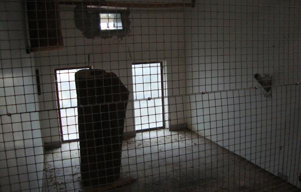 Vnitřní zázemí pro papoušky: podlaha je oproti obslužné chodbě ve voliérách zvýšena o necelý metr (Foto: Jan Potůček, Ararauna.cz)
