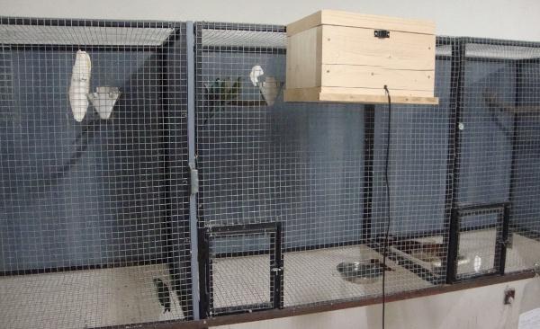 Detail hnízdní budky papoušků žlutoramenných. Všimněte si šňůry od tepelné fólie, která pomáhá v budce udržet teplotu okolo 20 stupňů. (Foto: Jan Potůček, Ararauna.cz)