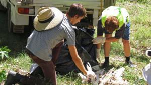 Pesticid zabíjel papoušky v Austrálii