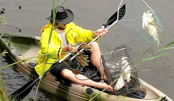 Dobrovolník loví mrtvá těla papoušků z řeky poblíž východoaustralského městečka Dubbo (Foto: Louise Donges, Daily Liberal)
