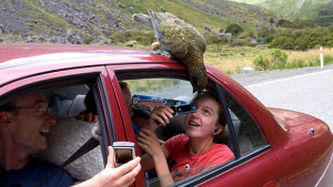 Nestor kea na automobilu