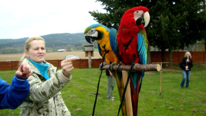 Seminář o volném letu papoušků