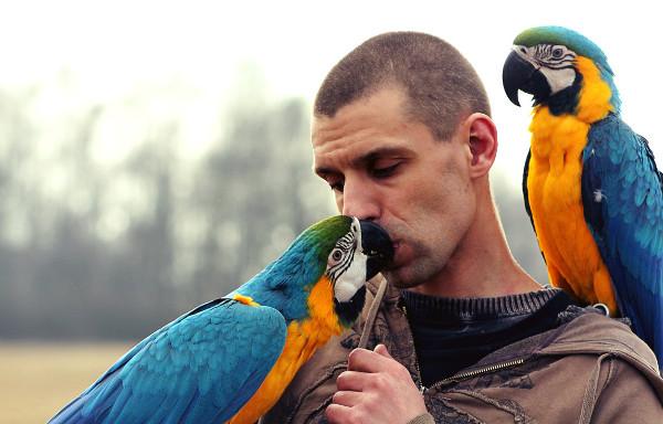 Autor článku ještě s oběma araraunami - na rameni sameček Blue, na ruce samička Perla (Foto: archiv Jana Matouška)