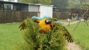 Volný let papoušků ve Faunaparku Lipová-lázně (Foto: Karlos Otruba)