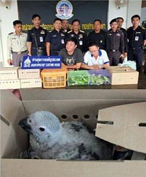 Zabavení papoušci, které se pokusili z Thajska do Kambodže propašovat dva Vietnamci (Foto: Pattaya Mail)