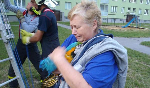 Ostravští hasiči vyjížděli v pátek 4. července k ulétlému arovi, který se vyškubnul majitelce i s kšírami (Foto: HZS Moravskoslezského kraje)