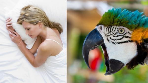 Hotel v britském zábavním parku nabízí hostům buzení araraunou