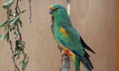 Méně voliér, větší prostor pro exoty. Letošní výstava v pražské Botanické zahradě myslí na pohodlí ptáků