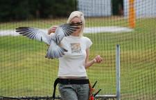 Nesmyslné spory na Facebooku degradují myšlenku volného létání papoušků v Česku