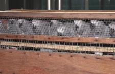 Bulhaři zabavili zásilku 30 pašovaných žaků určených pro Českou republiku