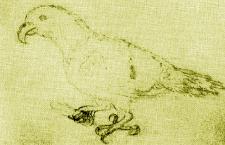 Eklektus různobarvý měl příbuzného na ostrovech Tonga. Vědci jej nazvali eklektus oceánský