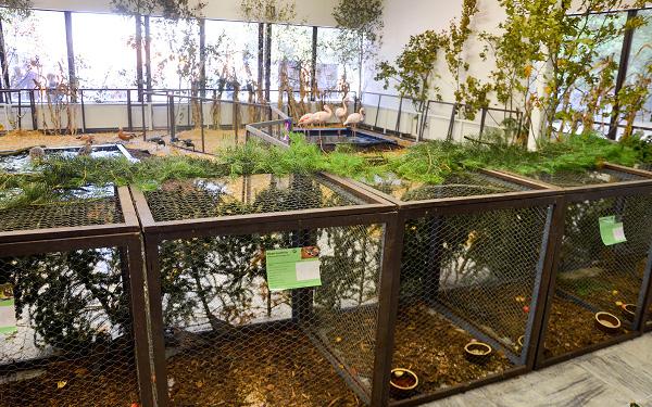 Samostatný pavilon mají bažanti a další hrabaví a vrubozobí ptáci, včetně plameňáků růžových (Foto: Radomír Veselý, Nová Exota)