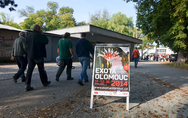 Exota Olomouc se letos koná ve čtyřech pavilonech olomouckého výstaviště Flora (Foto: Radomír Veselý, Nová Exota)