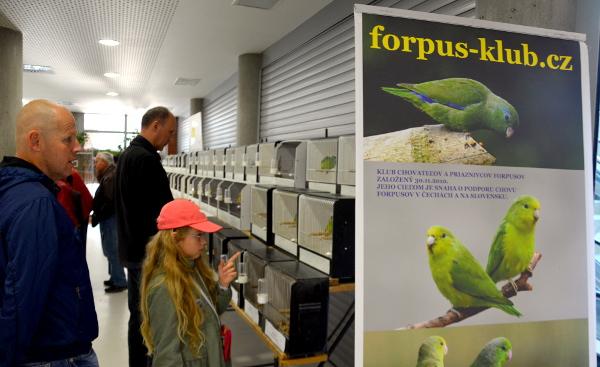 Expozice česko-slovenského Forpus klubu s nejmenšími druhy papoušků, papoušíčky (Foto: Radomír Veselý. Nová Exota)