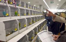 Návrh jednotných pravidel pro bodované výstavy exotických ptáků v Česku bude možné připomínkovat do konce září