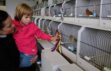 Jednotná pravidla pro bodované výstavy exotů v Česku odmítá i Moravský klub chovatelů andulek. Návrh může doznat změn