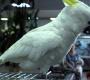 Zverimex musí zaplatit ženě za to, že jí prodal nemocného papouška, který krátce na to uhynul