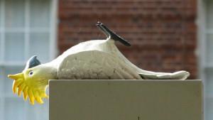 Maketa mrtvého kakadu