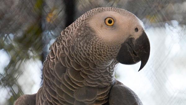 Přehled ptačích burz a výstav pro víkend 21. až 23. listopadu 2014