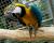 Zlínská zoo zrušila chov arů araraun a zelenokřídlých, chce se soustředit na vzácnější druhy
