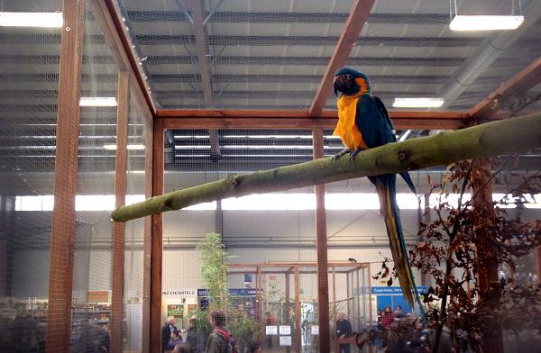 Loni byl největší papouščí vzácností na Exotice v Lysé nad Labem ara kaninda (Foto: Jan Potůček, Ararauna.cz)
