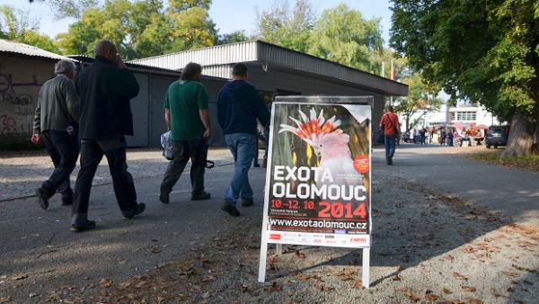 Organizátoři Exoty Olomouc 2014: Je škoda, že specializované kluby chovatelů ignorují velké výstavy