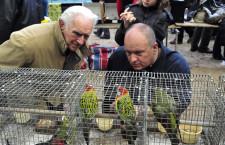 Přehled ptačích burz a výstav pro víkend 5. až 7. června 2020