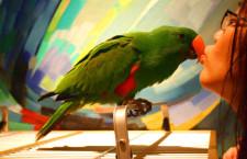 Vědci objevili virus, který usnadňuje přenos chlamydií z papoušků na člověka