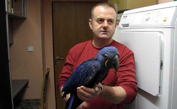 Jaroslav Jelínek s jedním z odchovaných mláďat ary hyacintového (Foto: Jan Potůček, Ararauna.cz)