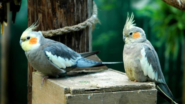 Přehled ptačích burz a výstav pro víkend 19. až 21. prosince 2014