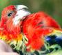 Ptačí chřipka a riziko nákazy u papoušků: na co si dávat pozor?