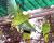 Vědci vypustili do volné přírody dalších 15 kriticky ohrožených amazoňanů portorických