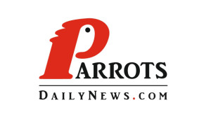 Parrots Daily News