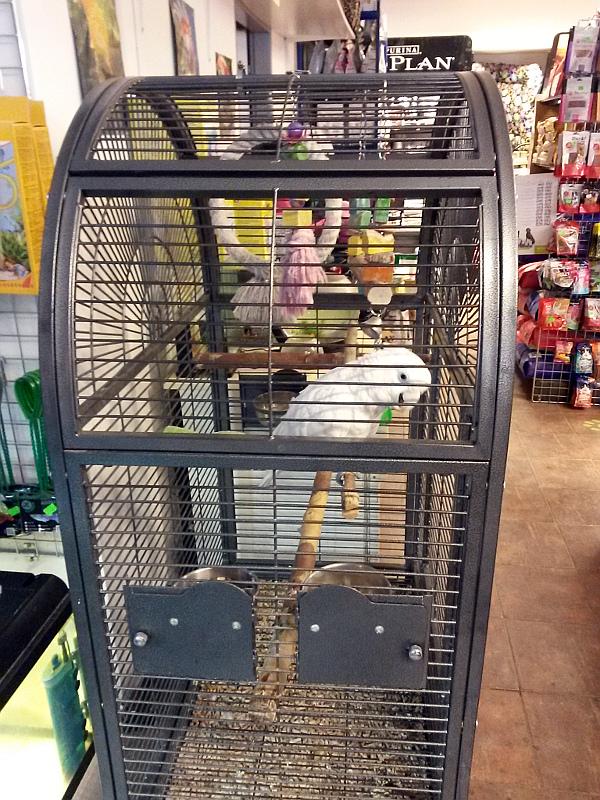 Tentýž kakadu a klec, kterou v obchodu obývá (Foto: Zdeněk Krňávek)