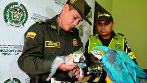 Kolumbijská policie zadžela pašeráka papoušků