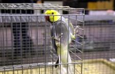 Přehled ptačích burz a výstav pro víkend 17. až 19. května 2019