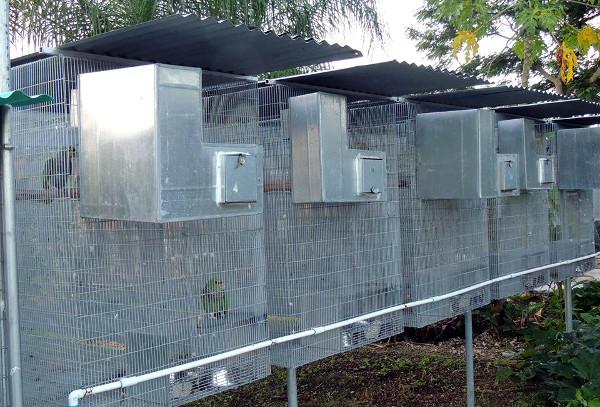 Parrot Rescue Florida dává přednost zavěšeným voliérám bez pevného dna, aby eliminoval nákazu papoušků ze zbytků potravy a trusu (Foto: archiv Tonyho Silvy)