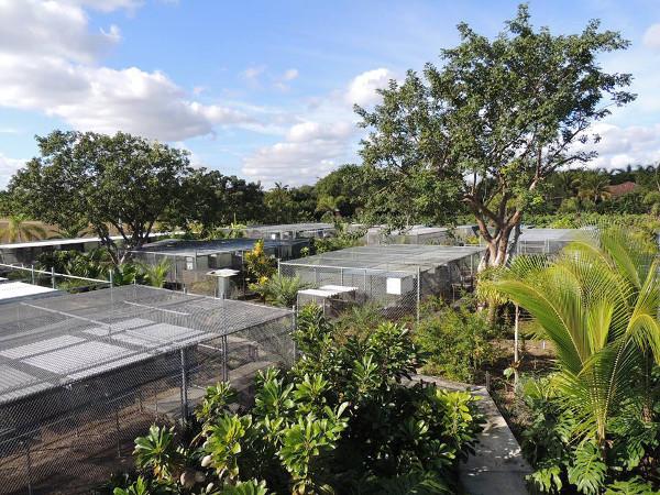 Pohled na chovnou stanici Parrot Rescue Florida, kterou založil a provozuje Tony Silva (Foto: archiv Tonyho Silvy)