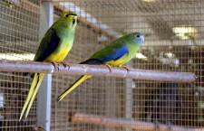 Přehled ptačích burz a výstav pro víkend 17. až 19. dubna 2015