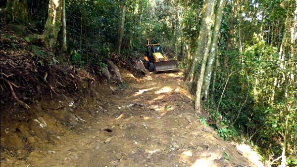 Buldozery ničí rezervaci v kolumbijské Santa Martě, hnízdiště pyrury zelenavého