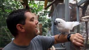 Válečný veterán s papouškem