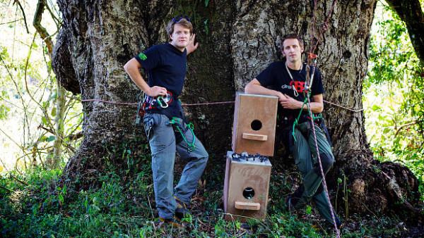 Nové budky mají ochránit jihoafrické papoušky kapské před divokými včelami