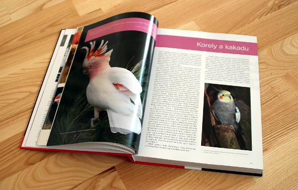 Jednotlivé kapitoly se zabývají příbuznými a podobnými druhy papoušků (Foto: Jan Potůček, Ararauna.cz)