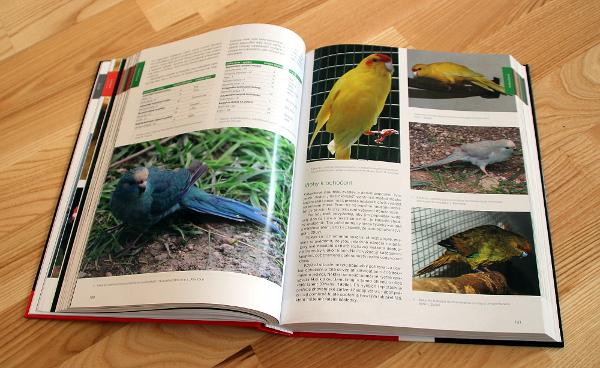 Kniha jistě potěší i chovatele mutačních papoušků (Foto: Jan Potůček, Ararauna.cz)