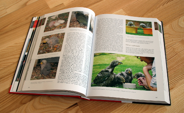 Publikace hodně čerpá ze zkušeností českých chovatelů, například z chovu nestorů kea Lubomíra Palkoviče (Foto: Jan Potůček, Ararauna.cz)
